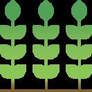 VISION PLANTS